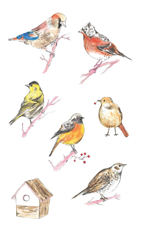 &Premium 鳥のイラストレーション